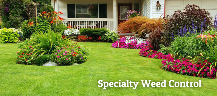 Specialty Weed Control